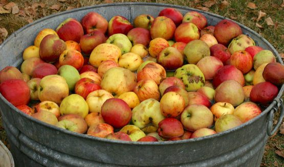 Take advantage of Fall harvest for liver-friendly cleansing treats (Photo credit: Creative Commons; Cale Bruckner).